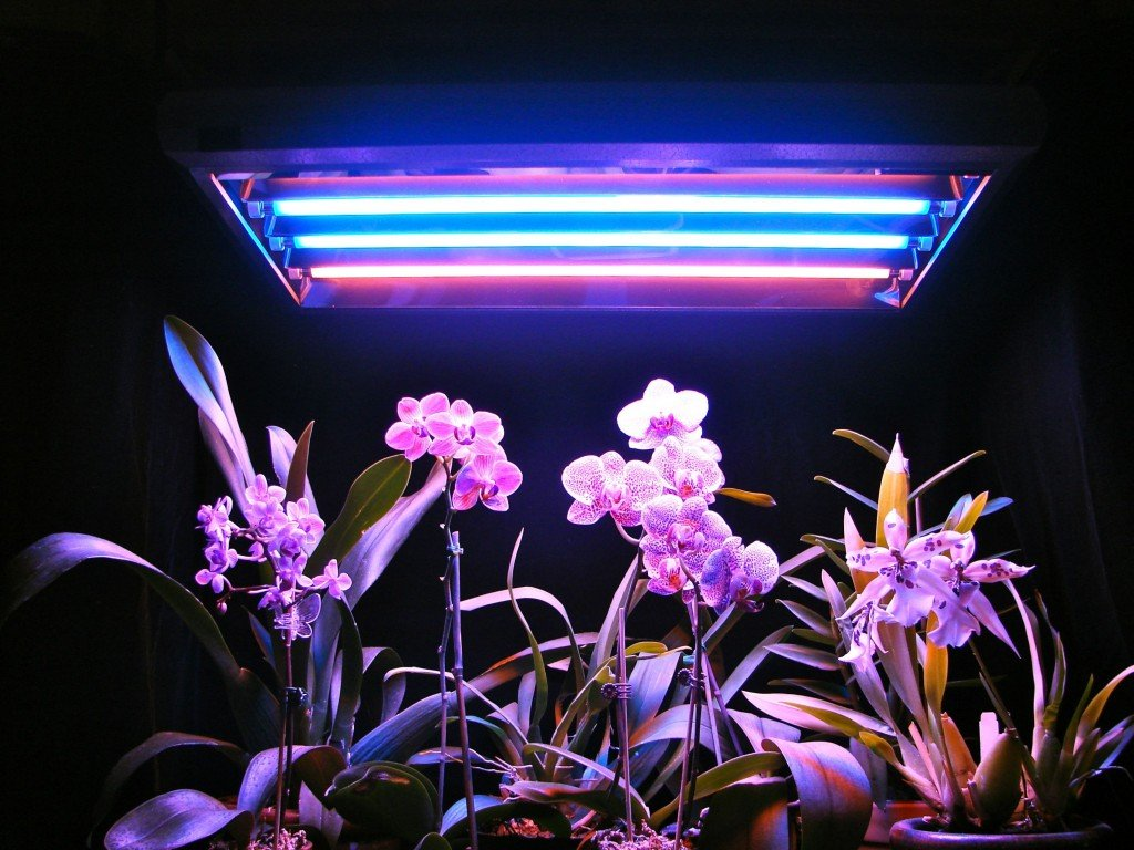 орхидея должна находиться на свету