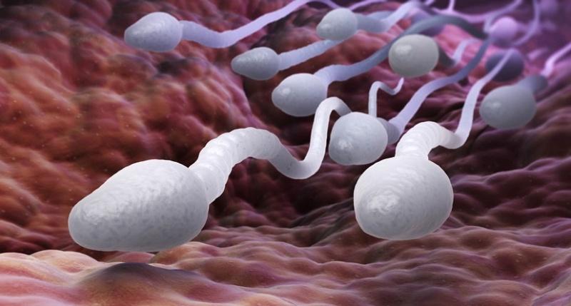 спермотозоиды