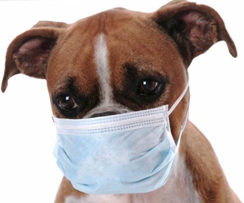 собака в медицинской маске