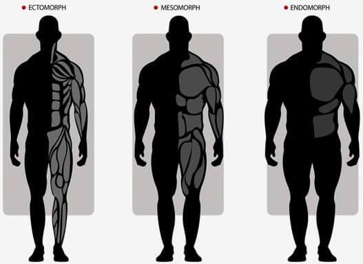 Тренировки и питание для разных типов телосложения