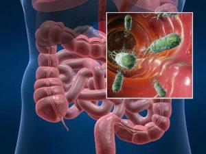 патогенная микрофлора