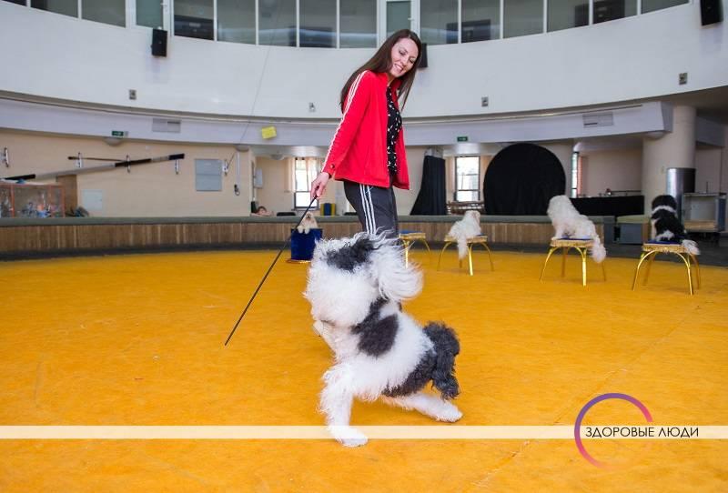 Дресировка собак в цирке