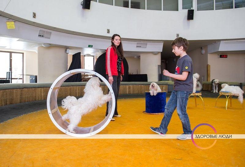 Дети артистов цирка