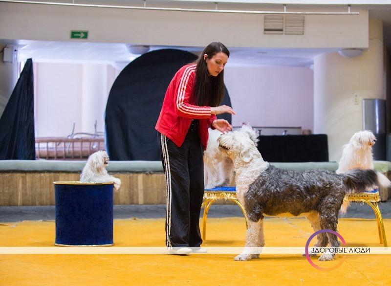 Дрессировка собак в цирке