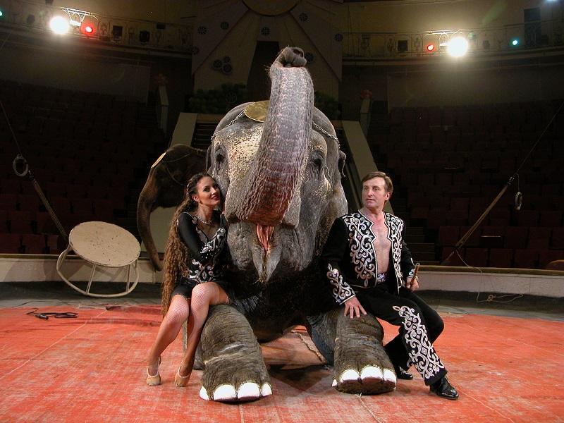 Дресировщики со слоном в цирке