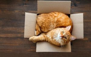 кот в коробке порядок